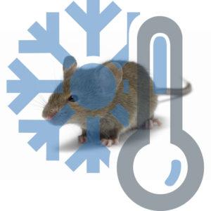 Мышь взрослая заморозка