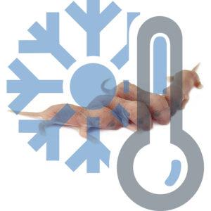 Мыши голыши заморозка