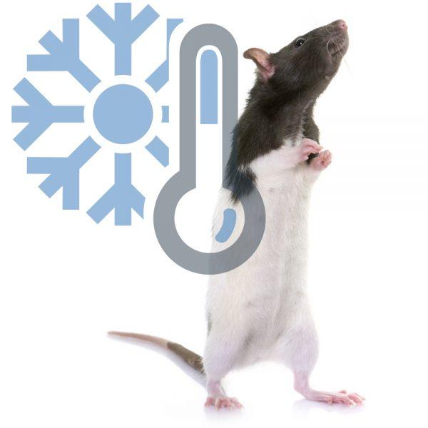 Крысы взрослые (заморозка)