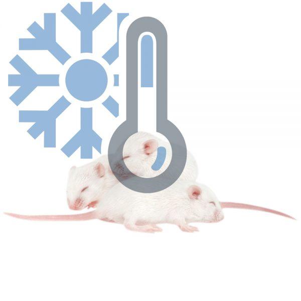 Мыши бегунки (заморозка)