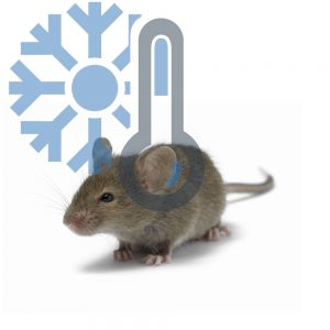 Мыши взрослые (заморозка)