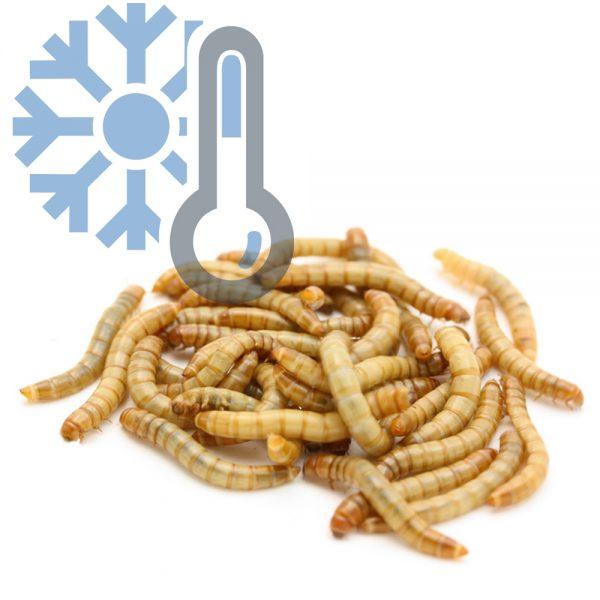 Мучной червь (заморозка)